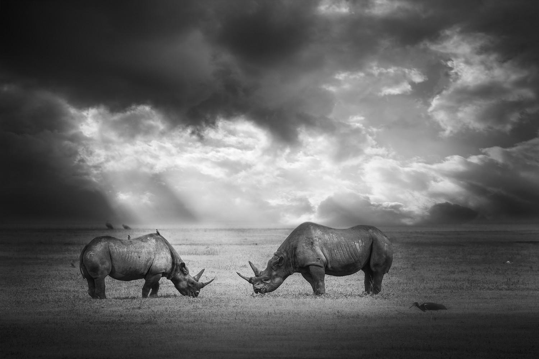 Tête à tête - Tanzanie 2016
