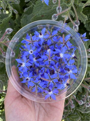 Edible Flowers - Borage *Order by Tuesday for delivery same week