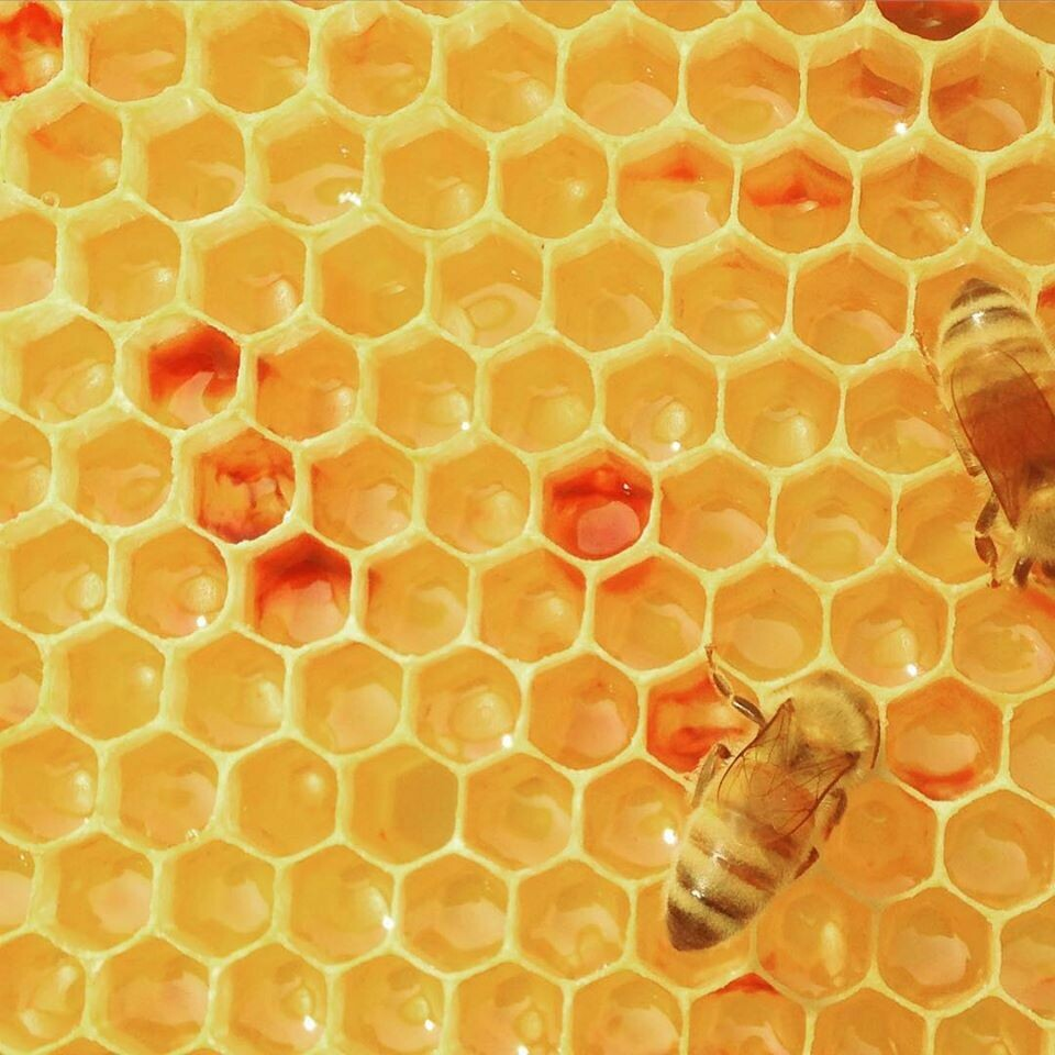 San Juan Island Honey Beeswax