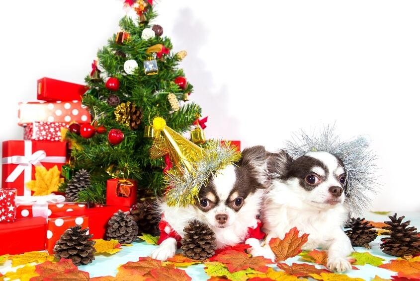 23 décembre: Atelier enfant: Arrangement de table pour Noël