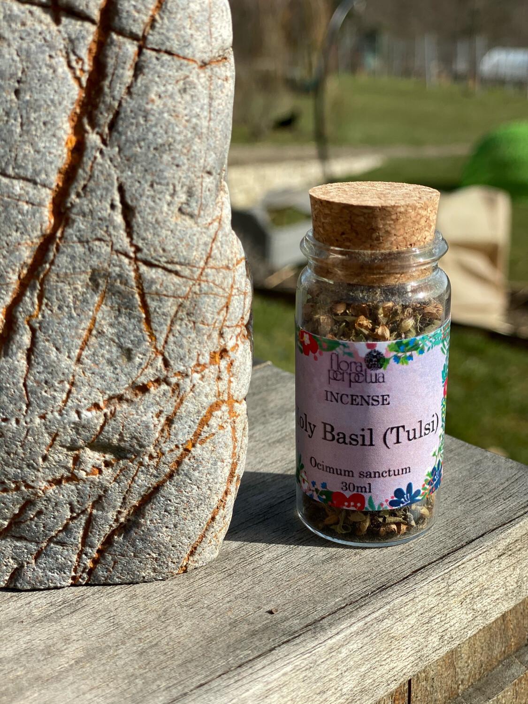 Basilic sacré dit «Tulsi», plante