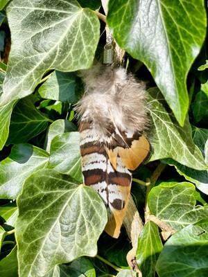 Une boucle d'oreille en plume avec fermoir en argent «ma vraie nature»