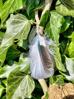 Une boucle d'oreille en plume avec fermoir en argent «je me sens légère»