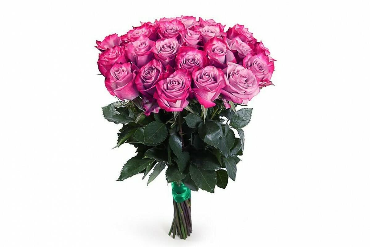 """Букет из 25 роз """"Дип пёрпл"""" 50 см высотой"""