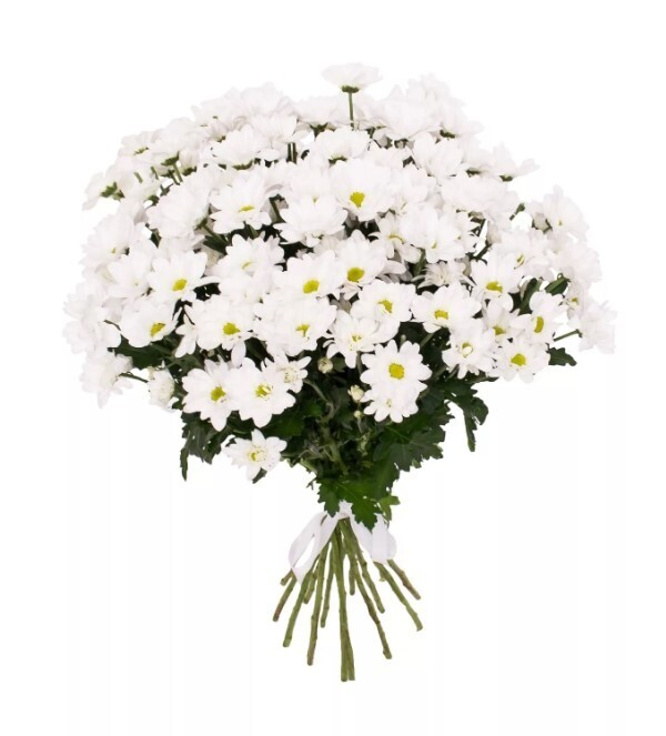 Aкция Букет из кустовой хризантемы 15 шт