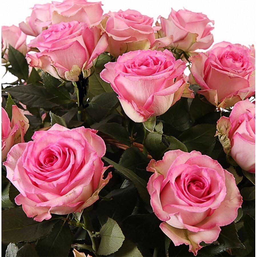 """Букет из 9 роз """"Свит Юник"""" 50 см высотой"""