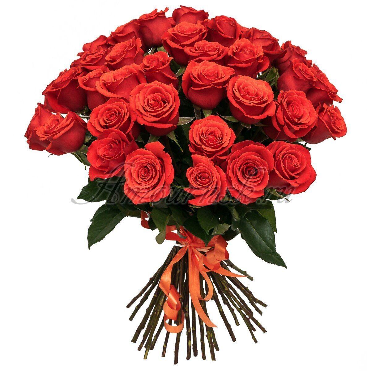 """Букет из 23 роз """"Нина"""" 60 см высотой"""