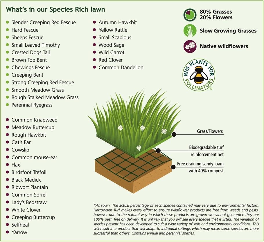Species Rich Turf