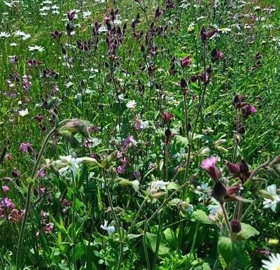 Woodland Shade Meadowmat HT-MEAD-WOODLAND