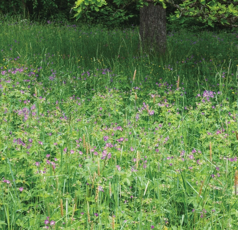 Woodland Shade Meadowmat