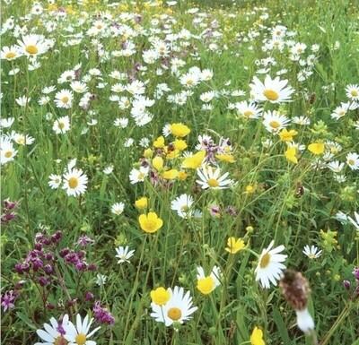 Wild Flower Turf (Traditional) SH-MEADOWMAT-TRAD