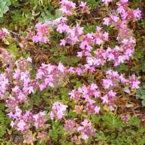 Cottage Garden Meadow Mat