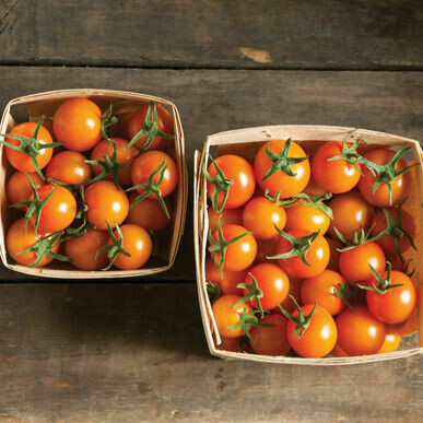 Pre-Order Tomato - Sun Gold Cherry
