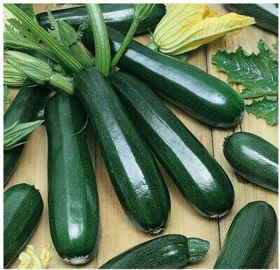 Pre-Order Zucchini - Black Beauty