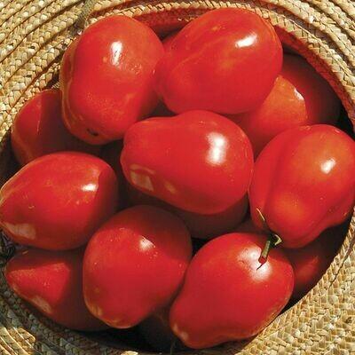 Pre-Order Tomato - Roma