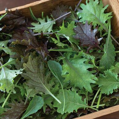 Pre-Order Kale Mix