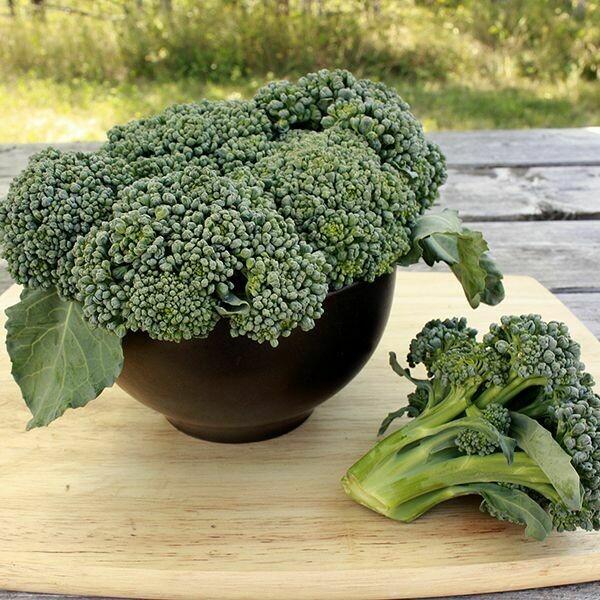 Pre-Order Broccoli - Watham