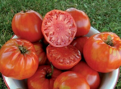 Pre-Order Tomato - Italian Heirloom