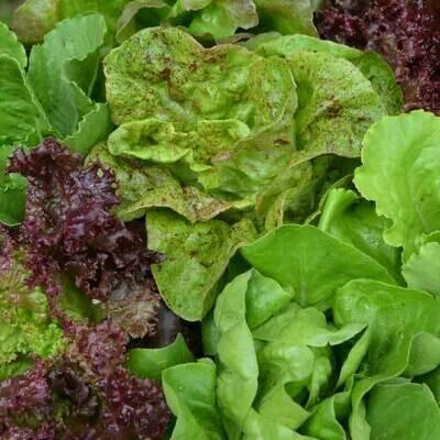 Pre-Order Lettuce Mix