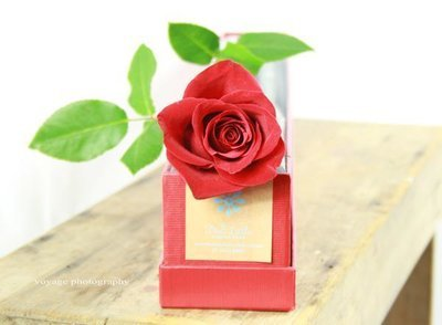 Single rose - PREORDER