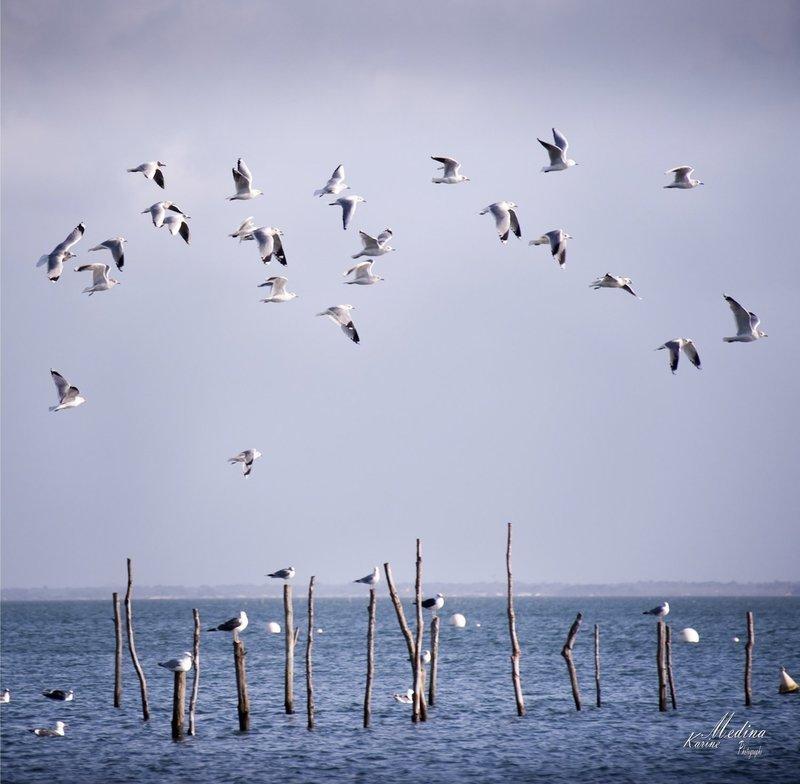 Oiseaux 40 cm X 40cm