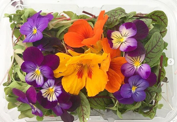 1 pkg Microgreens & Edible Flowers Mix (24 oz size container)