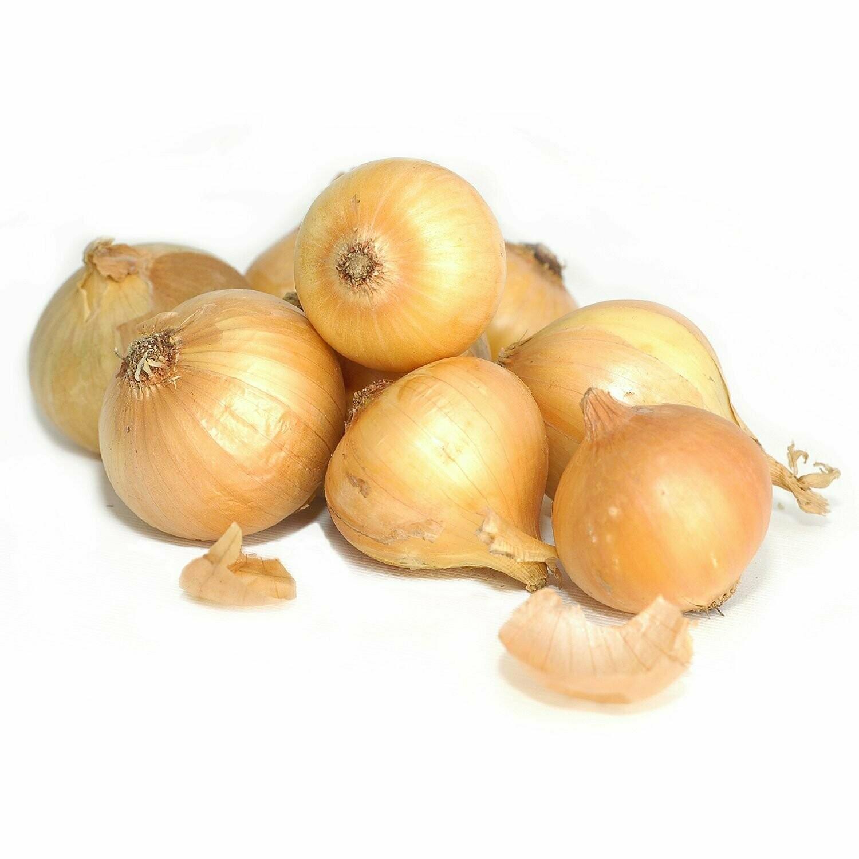 1 Lb. Onions - Cebolla - Oignon - Cebola (organic)