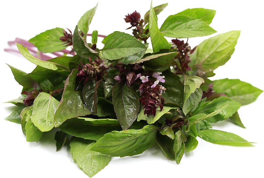 Albahaca Canela - Cinnamon Basil - Manjericão Canela - Basilic  Cannelle (o) (Envase de 4 oz.)