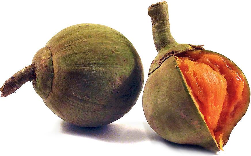 7 Zapote fruits - Canestel (o)