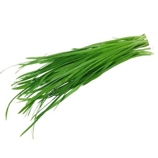 Garlic Chives - Cebollina de Ajo - Cebolihna Alho - Ciboulette Ail (h) (Envase de 8 oz.)