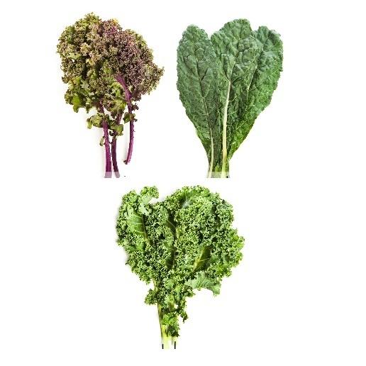 Kale - Couve Crespa e Toscana - Chou frisé non-pommé (o) (maso de 1/3 Lb)