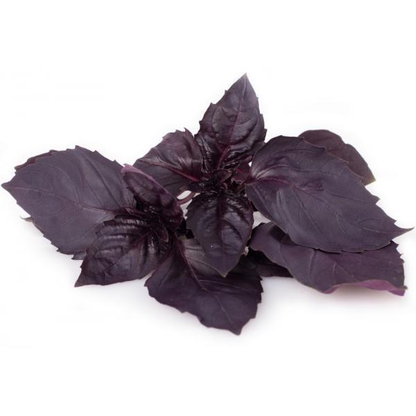 Albahaca Morada- Purple Basil - Manjericão Roxa - Violet Basilic (o) (Envase de 8 oz.)