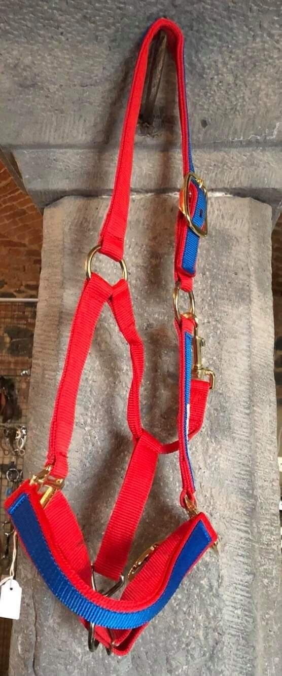 Nylon halter with colored parts