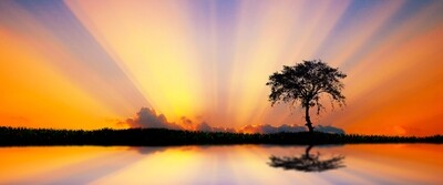 African Tree Silhouette