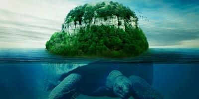 Island Earth Turtle