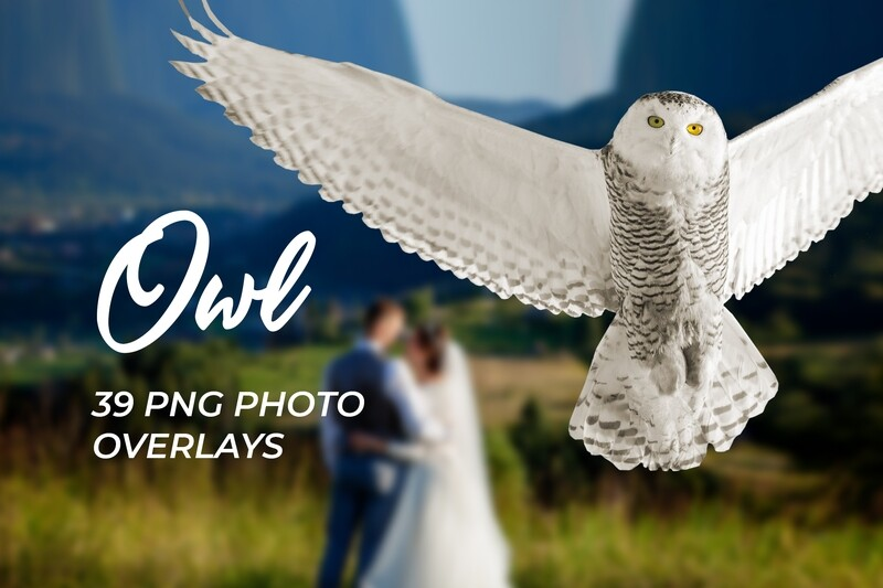 39 Owl Photo Overlays