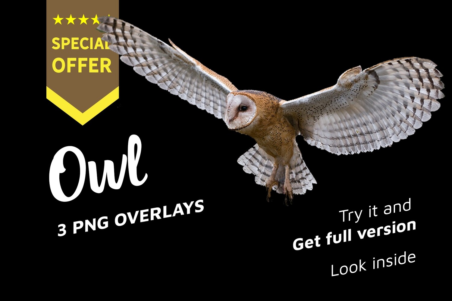 7 Owl Photo Overlays