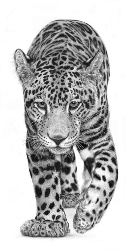 Mayan Monarch