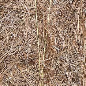 Pine Straw-NC Long Needle (Min. 100 bales for delivery)