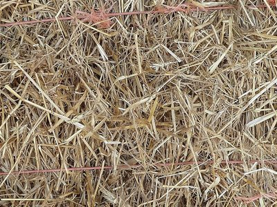 Wheat Straw (Min. 100 bales for delivery)