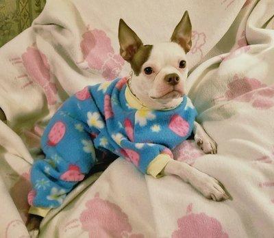 Doggie pajama sewing pattern - small thru xl multi sized pattern