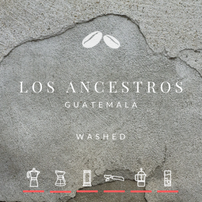 NEW! Guatemala Los Ancestros Washed