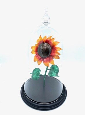 Single Sunflower in a Dome with Wooden Base