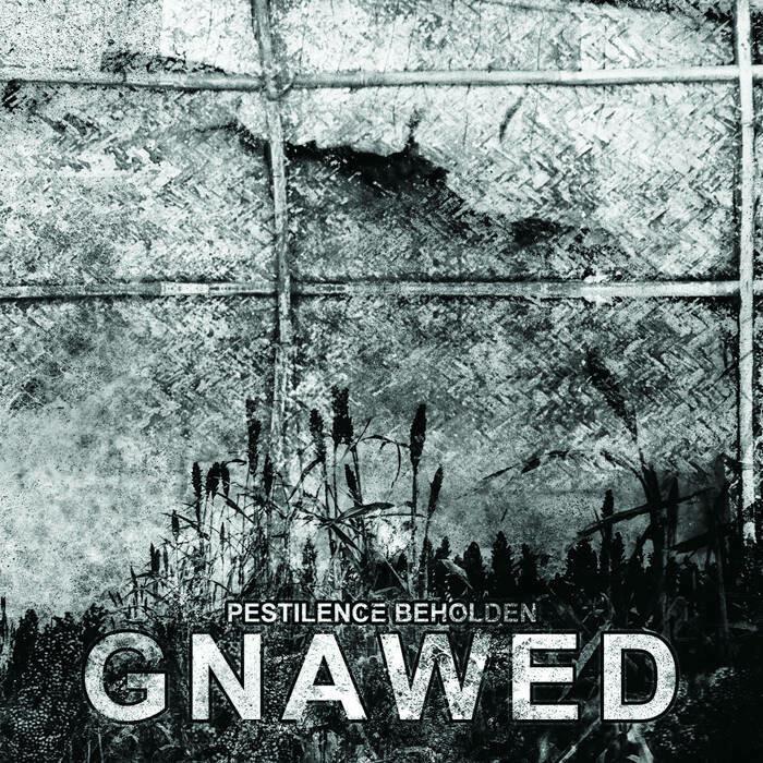"""Gnawed """"Pestilence Beholden"""""""