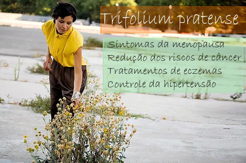 Trifolium pratense extrato seco 500mg - Cápsula