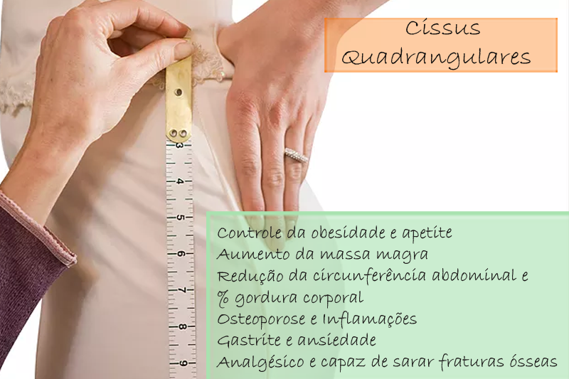 Cissus Quadrangulares extrato seco 150mg - Cápsula