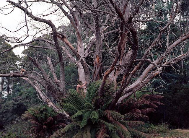 Woman in Tree, Tasmania