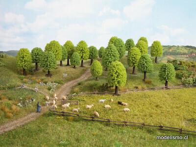 Noch 26801 25 árboles de hoja caduca.