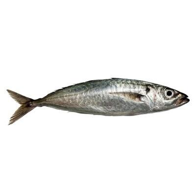 * Fresh Whole Boston Mackerel, Wild Caught, Per Pound