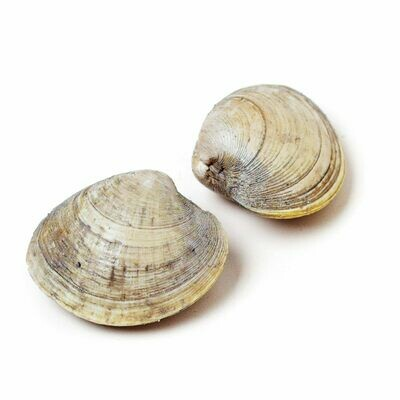 * Frozen Whole Little Neck Clams Cooked USA 12 Clams Per Pack